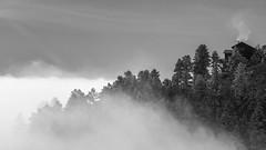 (Luminous☆West) Tags: sigma sd sdq sdqh quattro h sdquattroh foveon 85mm f14 14 dg art blackwhite blackandwhite bw sdqh1861 luminouswest luminous west x3f mountains colorado monochrome