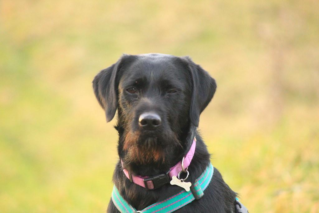 Aldeburgh Dog Walk
