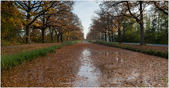 Water Reflections, Netherlands (CvK Photography) Tags: autumn autumncolors canon color cvk europe fall forest gelderland nature netherlands outdoor reflection veluwe klarenbeek nederland nl