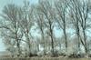 Frozen tree branches. (Alex-de-Haas) Tags: smorgens 50mm d5 hdr january nederland nederlands netherlands nikkor nikkor50mm nikon nikond5 noordholland schoorldammerbrug thenetherlands westfriesland bevroren bomen bridge brug cold daglicht daylight fog foggy freezing frozen handheld haze hazy highdynamicrange januari kou koud landscape landschap licht light mist misty morning nevel nevelig ochtend trees vrieskou water winter
