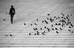 (cherco) Tags: stairs solitario solitary silhouette silueta shadow street step escaleras urban city composition composicion canon ciudad chica woman mujer paloma dove peldaño subir up lonely solitaria birds paris france blackandwhite blancoynegro canoneos5diii lines lineas arquitectura
