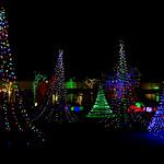Christmas Light Garden [Explore] thumbnail