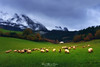 A rural life (Mimadeo) Tags: sheep basquecountry basque farm farmhouse herding shepherd landscape rural herd flock countryside animals field grass green mountain livestock farming farmland caserio atxondo axpe grazing paisvasco euskadi spain vizcaya urkiola latxa