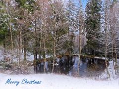 Merry Christmas (Elenovela) Tags: schnee snow waldsee lake wald woods bäume trees wasser water weihnachten christmas weihnachtsgrüse christmasgreetings postkarte postcard weihnachtszeit christmastime nationalparkhunsrückhochwald nationalpark deutschland germany saarland panasonicgh4 panasonicgvario1445mmf3556 elenovela karstenmüller froheweihnachten merrychristmas