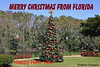 Merry Christmas & Happy New Year (robert (Bobby)powell) Tags: bonitaspringsfl landscape esterofl thecommons december merrychristmas christmascards christmasseason tamron18400 powell robertbobbypowell rpowell countylee florida southwestflorida winter2017 december2017 trees canon greengrass usa happynewyear2018 park thecommonsclub flickr leecounty floridaimages winter201718 bingimages christmastree