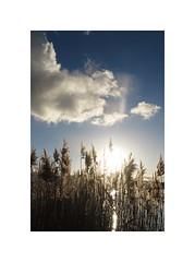 Sunny rain (nathaliedunaigre) Tags: sunset coucherdesoleil nuages clouds roseaux reeds lake lac lacdannecy lakeofannecy paysage landscape france hautesavoie sky light lumière nature