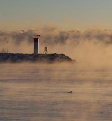 Steaming Cold (Gavin Edmondstone) Tags: bronteharbour lighthouse lakeontario redbreastedmerganser cold winter oakville ontario cans2s mist