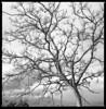 stripped from winter (ukke2011) Tags: hasselblad503cw planarcfe8028 ilforddelta100 selfdeveloping rodinal 150 film pellicola 6x6 square 120 bw mediumformat analog analogico tree albero winter inverno blackandwhite