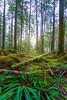 Forest Sunset (_Ruby Huang_) Tags: mt rainier national park pnw rainforest sunset nikon d800 stayandwander landscape