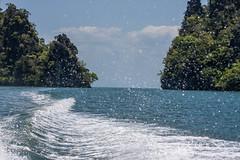 Malaysia-14728.jpg (CitizenOfSeoul) Tags: malaysia pulaulangkawi wildlife see langkawi andamanensee outdoor wildlebendetiere animal