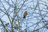 Marsh Lane Nature Reserve 1st January 2018 (boddle (Steve Hart)) Tags: stevestevenhartcoventryunitedkingdomcanon5d4 marsh lane nature reserve 1st january 2018 steve hart boddle steven bruce wyke road wyken coventry united kingdon england great britain canon 5d mk4 100400mm is usm ii wild wilds wildlife life natural bird birds flowers flower fungii fungus insect insects spiders butterfly moth butterflies moths creepy crawley winter spring summer autumn seasons sunset weather sun sky cloud clouds panoramic