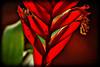Deep Cut Gardens_692 (samramahmoud) Tags: plants sonnart18135 zeiss sony