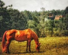 GRAZING 'NEATH THE PRISON GUARD TOWER (NC Cigany) Tags: nature field abandoned color horse nc raleigh prison