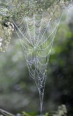 4-WetWeb (T's PL) Tags: chessienaturetrail d7000 nikond7000 nikon lexington lexingtonva spiderweb tamron18270 tamron18270mmf3563diiivcpzd nikontamron va virginia web macro bokeh