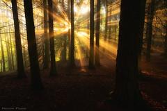 The awakening of the Forest (Hector Prada) Tags: bosque niebla bruma amanecer primavera luz contraluz sol árbol hojas forest fog mist sunrise spring light backlight sun tree leaves spiritual magic enchanted paísvasco basquecountry