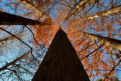 Woods (namhdyk) Tags: tree forest woods autumn winter canon canonpowershot canonpowershotg7x