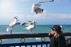(M J Adamson) Tags: newbrighton christchurch canterbury nz newzealand outdoors summer birds seagulls people