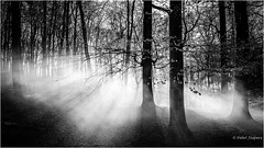 We live on a mote of dust suspended in a sunbeam (Peter Jaspers) Tags: frompeterj© 2017 olympus omd em10 1240mm28 trees bw blackwhite zwartwit openluchtmuseum gelderland wittewieven arnhem mist mysterious light shadow winter widescreen 169