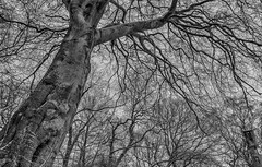 If trees could tell stories... (Andrew Kettell) Tags: