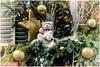 MERRY CHRISTMAS  dear  friends  !!!  Buon Natale ... (miriam ulivi) Tags: miriamulivi nikond7200 francia alsazia colmar christmasdecorations decorazioninatalizie