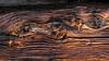 "Strudel im fließenden Holz (""Besenbinder"") Tags: sanmartinoinbadia trentinoaltoadige italien italy südtirol altoadige valvenosta holz wood bois legno madeira madera brixen eisacktal albeins albes besenbinder arminskowalski panasonic dmcfz200"