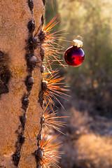 Merry Christmas to all (doveoggi) Tags: 8230 arizona desert mcdowellsonoranpreserve scottsdale