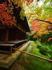 西芳寺(苔寺) Moss garden of Saihoji (Eiki Wang) Tags: こうよう もみじ kyoto saihoji moss garden 西芳寺 苔寺 京都