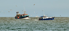 Fishing boat and pleasure craft (philbarnes4) Tags: fishingboat fishing broadstairs thanet kent england dslr philbarnes nikond5500 waterscape seagulls