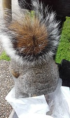 A Tail..... (Julie Rutherford1) Tags: squirrel bag croissant upside down holland park london japanese garden