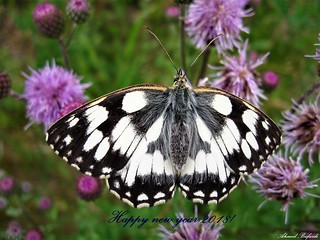 Butterfly 1542
