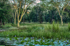 Fever forest 2 GNP (zimbart) Tags: mozambique africa gorongosanationalpark locations roadno1 water