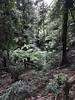 australian national botanic garden-49 (billdoyle[mobile]) Tags: australiannationalbotanicgarden act garden botanicgarden australia australiancapitalterritory anbg canberra australian billdoyle canberratripdec17jan18