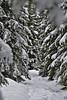 Winterwald (Til..) Tags: harz bäume tanne verschneit schnee weis tree white snow woods nikond7100