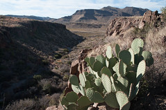 Banditos Canyon, Big Bend Ranch State Park (MikeInOwasso) Tags: banditios canyon big bend ranch state park texas cactus prickly pear sunlight landscape open expansive nikon dslr d90 mountains rocks creek desert south