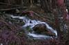 Rivière en pose longue - IR (Gui.llau.me) Tags: water pose longue long exposure ir infrared infra infrarouge rouge nature landscape land fr france auvergne purple violet eau fleuve arbre