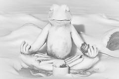 C'mon baby just one little kiss ... (babs van beieren) Tags: frog prince rose 7dwf thursday blackandwhite monochrome winter snow garden psp animal fauna