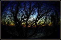Winter Sunrise (Shastajak) Tags: sunrise trees fairlightglen eastsussex earlymorning photoshopcc layers textures blending filters