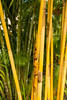 Bamboo shot (tommyajohansson) Tags: rakhine myanmarburma mm tommyajohansson geotagged ngpalibeach bayofbengal