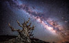 Ancient Bristlecone Pine Forest White Mountains Milky Way Rising over Bristlecone Pine Tree: McGucken Fine Art Landscape & Nature Photography: Light Beams & Dr. Elliot McGucken Epic Fine Art! (45SURF Hero's Odyssey Mythology Landscapes & Godde) Tags: mcgucken fine art landscape nature photography light beams dr elliot epic