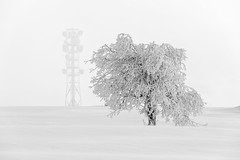 Blackforest Winter 2017 (bcmng) Tags: blackforest blackforestmountains schwarzwald winter winter2017 hornisgrinde mummelsee laufschwarzwald laufglashütte schwarzweiss blackwhite blackwhitephotography badenwürttemberg germanwinter snow schnee winterlandscape winterlandschaft landschaft travel travelphotography deutschland germany seebach sasbachwalden schwarzwaldhochstrasse fernsehturm