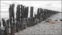 Moddergat  (Explore 06-01-2018) (Bert Kaufmann) Tags: nederland netherlands paysbas niederlande friesland frise moddergat waddenzee dongeradeel inexplore explore explored