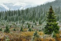 Canada, early snowfall (Vittorio Ricci (thanks +++ 3.3 millions views)) Tags: canada alberta canadianrockies