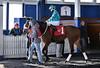 "2017-12-26 (27) r3 Christian Hiraldo on #1 My Sweet Autumn (JLeeFleenor) Tags: photos photography maryland md horse jockey جُوكِي ""赛马骑师"" jinete ""競馬騎手"" dżokej jocheu คนขี่ม้าแข่ง jóquei žokej kilparatsastaja rennreiter fantino ""경마 기수"" жокей jokey người horses thoroughbreds equine equestrian cheval cavalo cavallo cavall caballo pferd paard perd hevonen hest hestur cal kon konj beygir capall ceffyl cuddy yarraman faras alogo soos kuda uma pfeerd koin حصان кон 马 häst άλογο סוס घोड़ा 馬 koń лошадь laurelpark marylandraces races outdoors outside winter cold paddock"