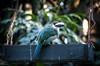 Emerald toucanet (wuestenigel) Tags: bird tropical green beak emerald toucanet nature vogel natur wildlife tierwelt animal tier tree baum park garden garten wild wood holz noperson keineperson outdoors drausen zoo wing flügel tropisch color farbe feather feder environment umgebung schnabel rainforest regenwald fly fliege