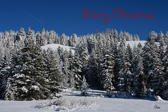 Merry Christmas Everyone! 0621b+ (teagden) Tags: merry christmas merrychristmas landscape landscapephotography jenniferhall jenhall jenhallphotography winter winterscene winterphotography winterlandscape scenic snow cold coldmorning freezing mountain mountains snowtrees wyoming wyominglandscape happy holidays happyholidays