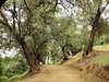 IMGP3045 (janeautumn64) Tags: morocco demnate olives