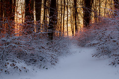 sunset in winterforest (renatecamin) Tags: snow tree landscape nature forest