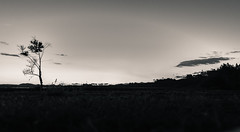 NZ_2017_dec1 (obipeti) Tags: new zealand black white dusk sunset tree nikon d7200 sigma 1020 f35