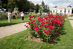 Liège (GenJapan1986) Tags: 2017 バラ ベルギー リエージュ 旅行 liège wallonie travel belgium fujifilmx70 rose flower
