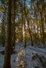 """a woodland path in the snow while the sun shines low through the trees. Near Potterton, Aberdeenshire, Scotland (grumpybaldprof) Tags: aberdeenshire scotland uk """"siorrachdobardheathain"""" """"fineart"""" ethereal striking artistic interpretation impressionist stylistic style contrast shadow bright dark black white illuminated colour colours colourful """"forestwalk"""" landscape trees branches leaves shapes patterns vanishingpoint sunshine snow canon 7d """"canon7d"""" sigma 1020 1020mm f456 """"sigma1020mmf456dchsm"""" """"wideangle"""" ultrawide"""